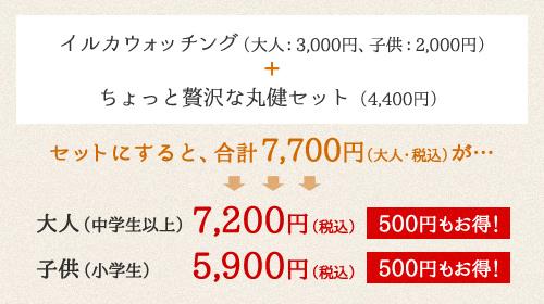 イルカウォッチング(大人:3,000円、子供:2,000円)+ちょっと贅沢な丸健セット(4,400円)