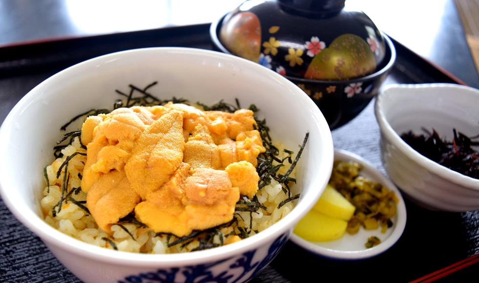 イルカウォッチング + ぜっぴん旬の生うに丼